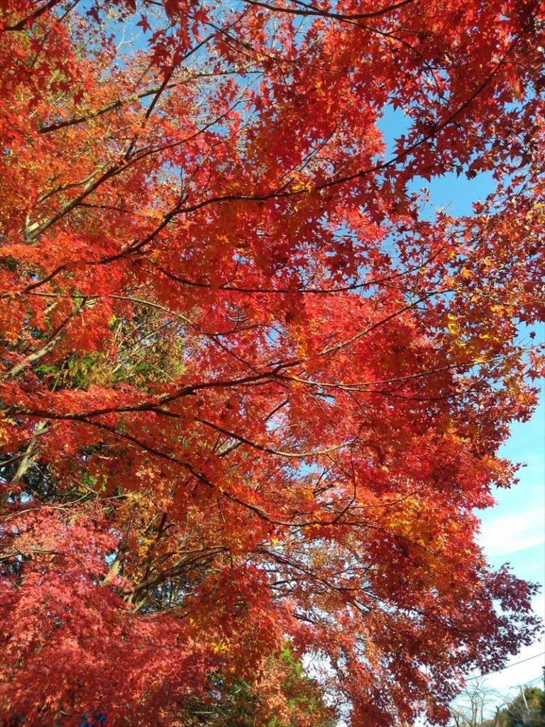 ZenFoneMaxM1で撮影した風景写真